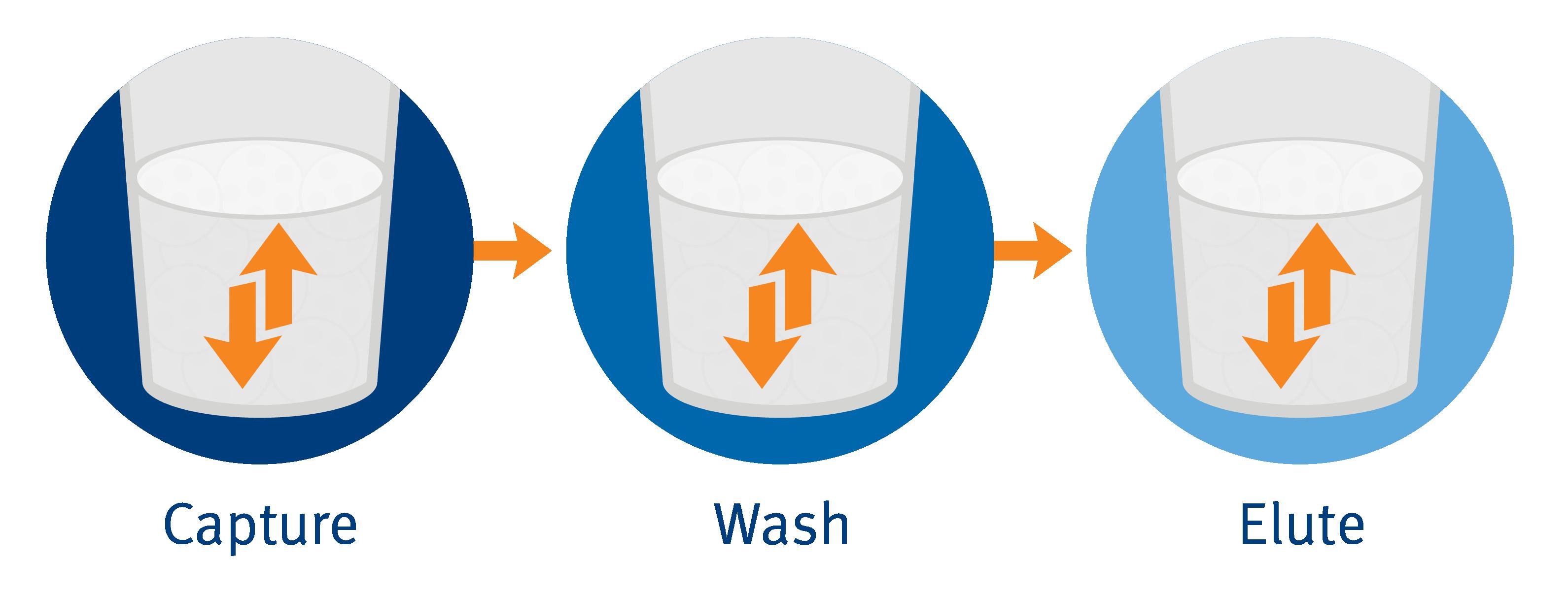 biomark002.441 - Capture Wash Elute