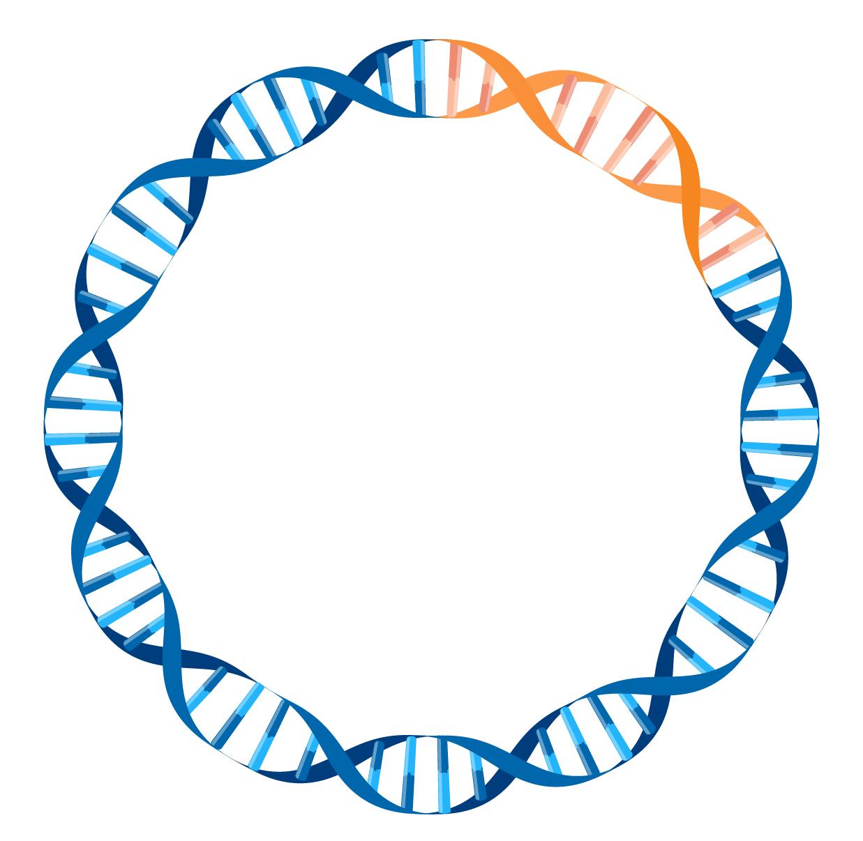 plasmid DNA circle