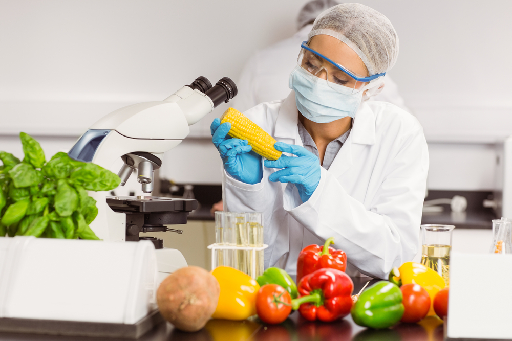 Food scientist looking at corn cob at the university